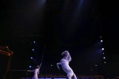 1_FRANCK-ETCHEVERRY_Circus-2031
